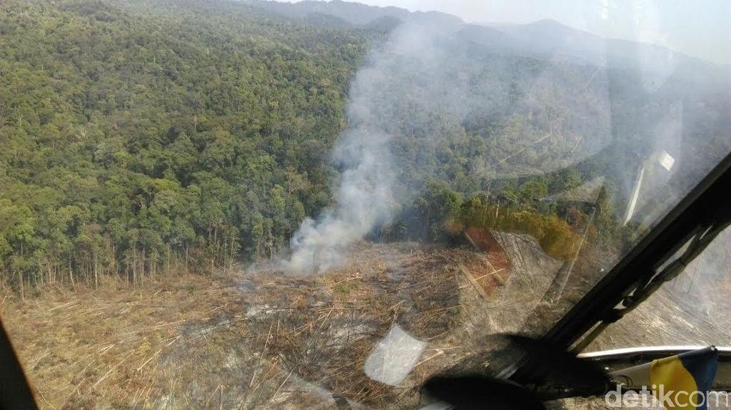 Ini Penampakan Lahan yang Terbakar di Riau dari Udara, Akan Disegel Satgas