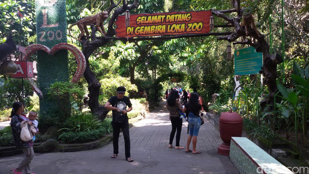 Pemburu Pokemon Serbu Kebun Binatang Gembira Loka Yogyakarta