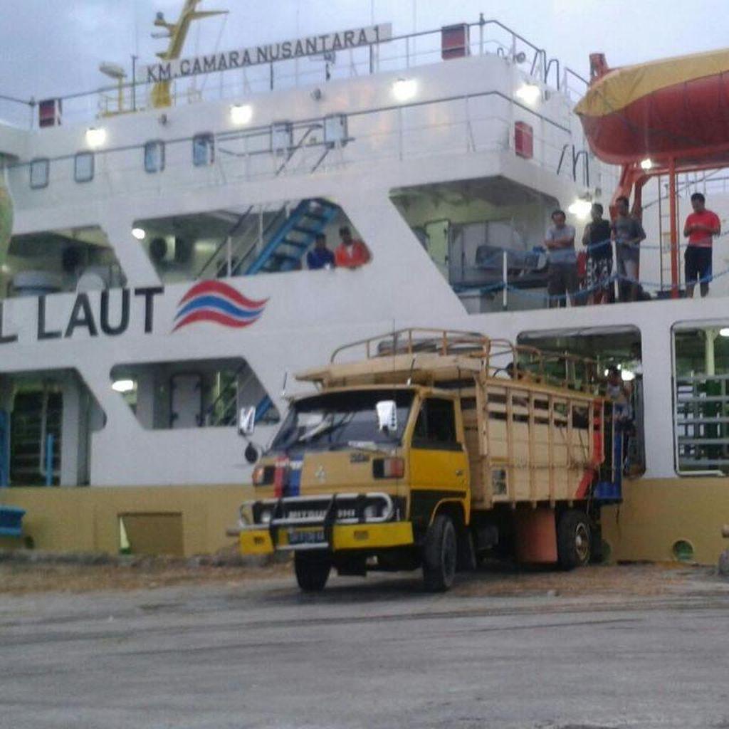 Kapal Ternak Tiba Minggu Pagi di Priok, Angkut 471 Sapi