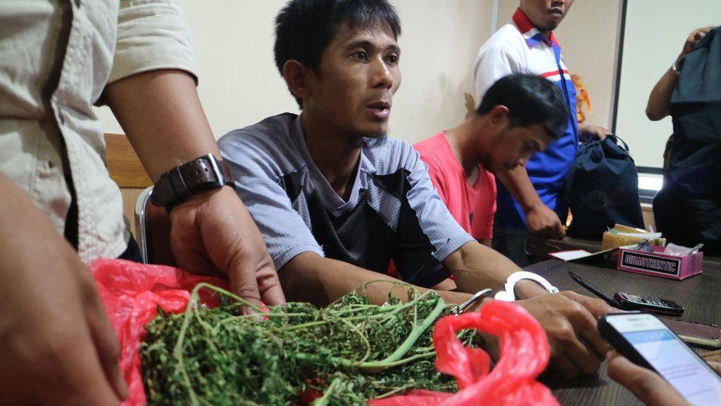 Pria asal Makassar Berurusan dengan Polisi karena Tanam Ganja di Rumah