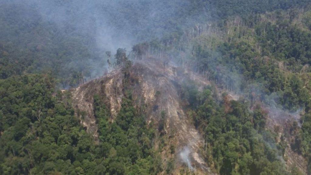 KLHK Pelajari SP3 15 Kasus Kebakaran Hutan, Ini Tanggapan Polri
