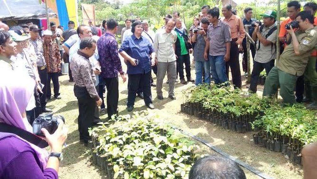 Menteri LHK: Hutan Tanaman Rakyat Harus Sejahterakan Masyarakat