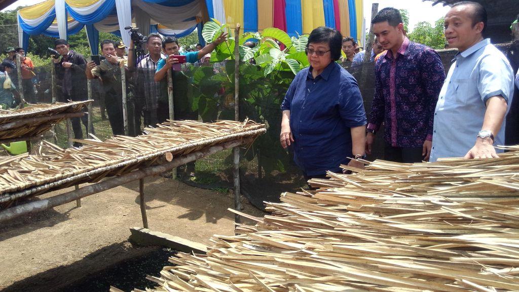 Menteri LHK: Hutan Tanaman Rakyat Solusi Atasi Konflik Kawasan Hutan