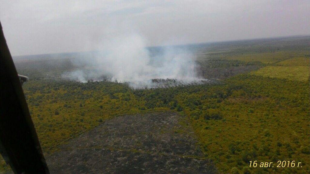 Kawasan Hutan Lindung Bukit Suligi Riau Terbakar dalam Sepekan Terakhir