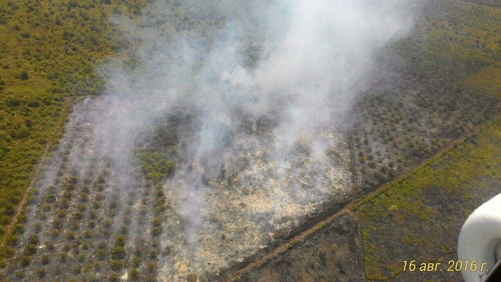 Satgas Udara Karhutla Duga 20 Hektare Lahan di Rohil Riau Sengaja Dibakar