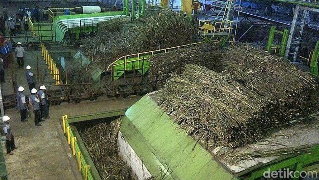 Harga Lelang Gula Rendah, Petani Tebu Salahkan Pemerintah