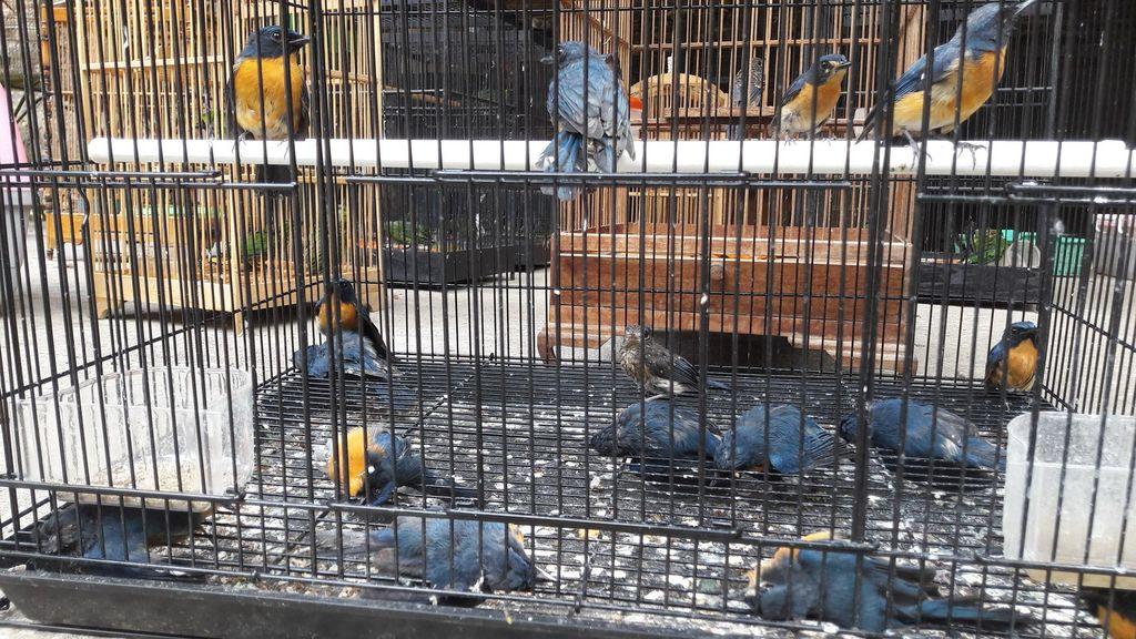 Dikirim Secara Tak Layak, Ratusan Burung Mati di Bandara Solo