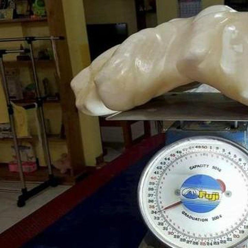 Mutiara terbesar Dunia Seberat 34 kg Ditemukan di Filipina