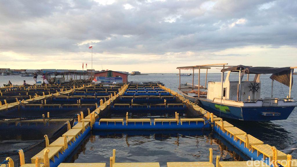 Jatuh Bangun Nelayan Pulau Bungin Kelola Resto Apung dan Budidaya Ikan Laut