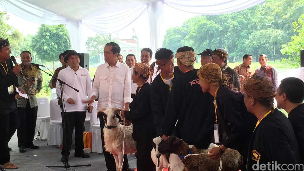 Merespons Peternak, Jokowi Gelar Kontes Domba Berhadiah Rp 1 M