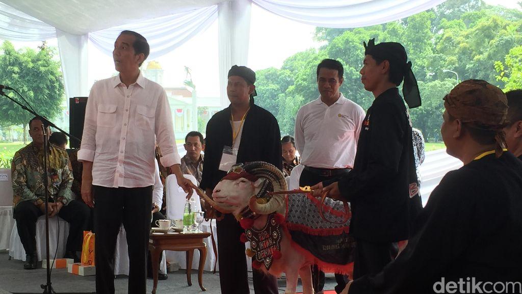 Begini Serunya Saat Domba Garut Catwalk di Depan Presiden Jokowi