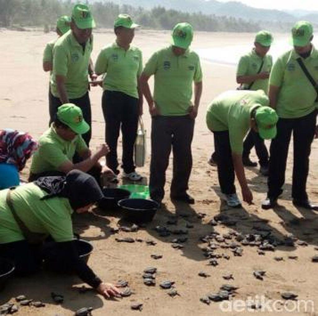 800 Anak Penyu Dilepas di Pantai Taman Pacitan