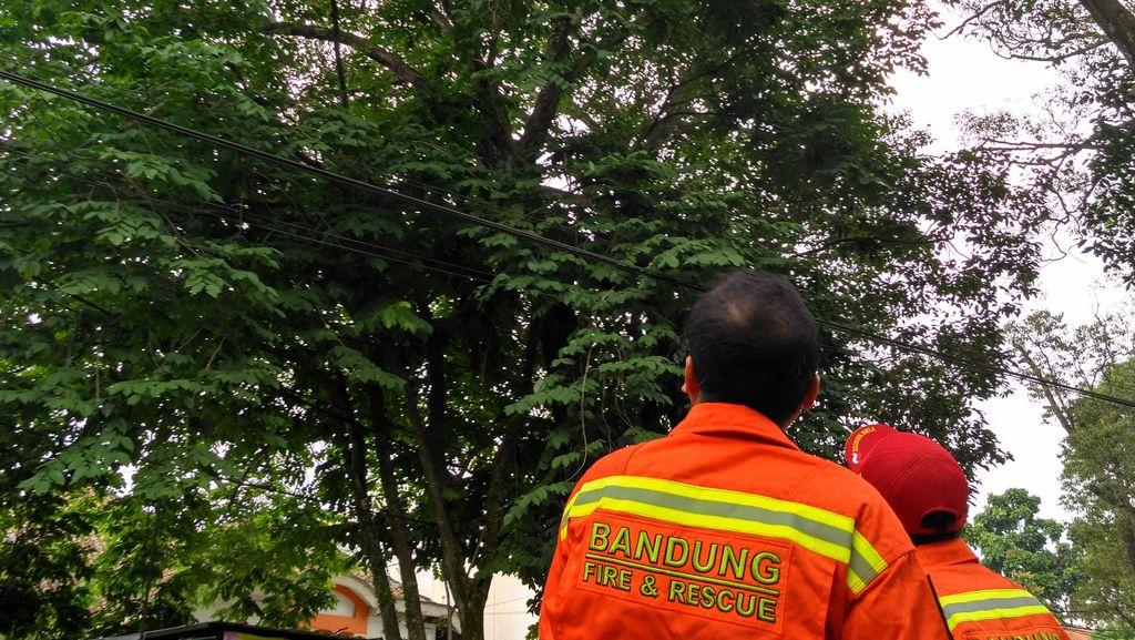 Aksi Regu Penyelamat di Bandung Selamatkan Kucing Terjebak di Puncak Pohon