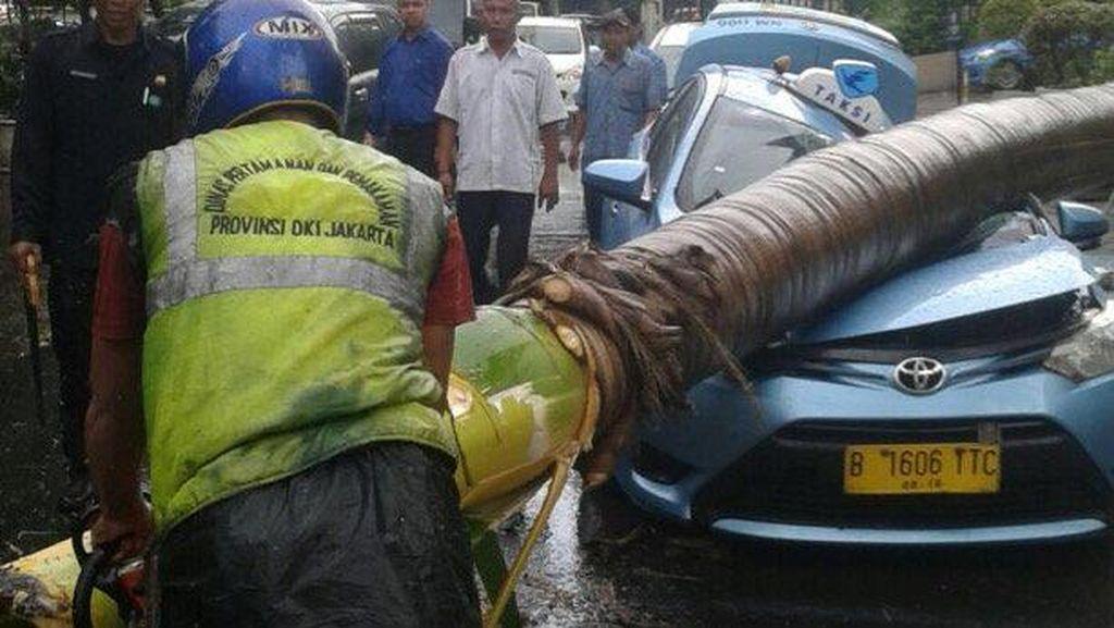Pohon Tumbang di Jakpus Timpa Taksi Hingga Ringsek Berat, Ini Penampakannya