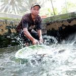 Program 10.000 Kolam Ikan Banyuwangi Tembus Target