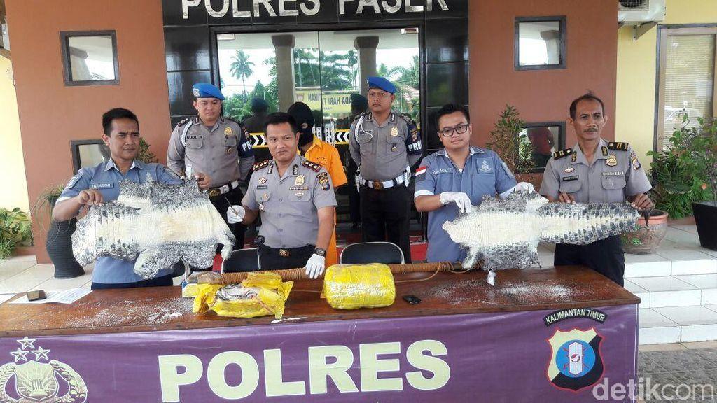 Polisi Bekuk Pelaku Penjualan Kulit 120 Ekor Buaya di Paser Kaltim