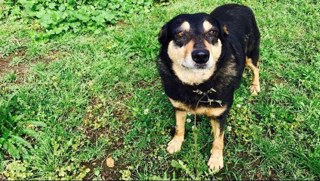 Anjing Sering Kabur, Pemilik Kena Denda Rp 40 Juta