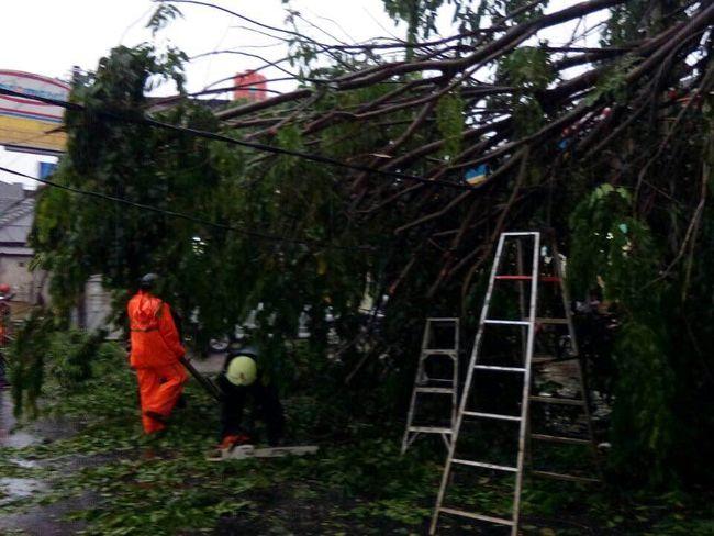 Pohon Tumbang Timpa Kabel Listrik di Cipayung Jakarta Timur