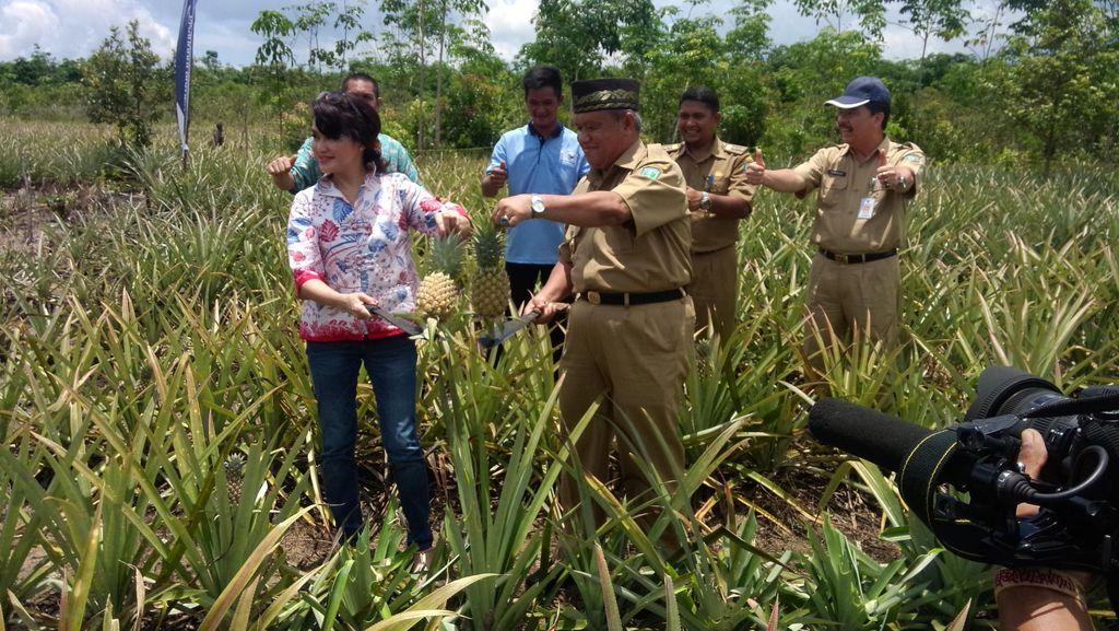 Melihat Agrowisata Nanas dan Lada Unggulan Belitung