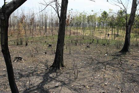 wonglow.blogspot.com .::: Kerusakan Alam Dan Cara Pencegahanya
