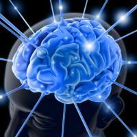 Bagian Otak