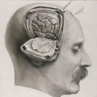 otak laki laki