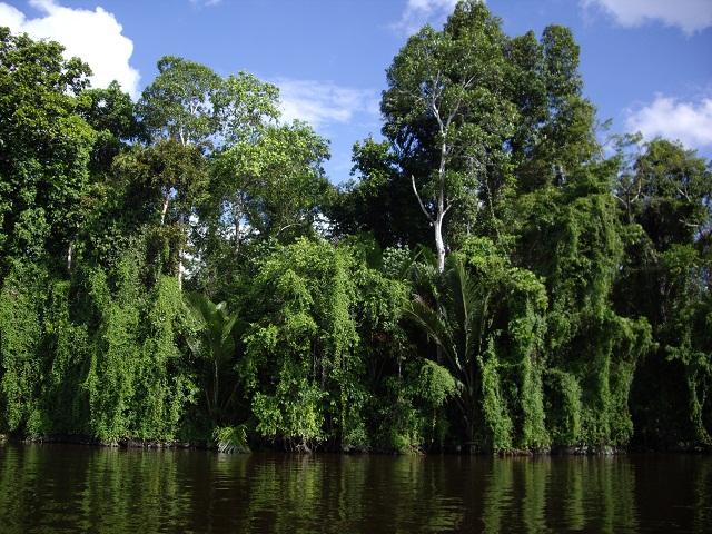 Hutan hijau papua