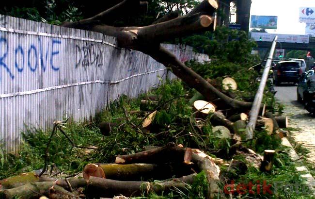 Pohon Tumbang di Pondok Indah