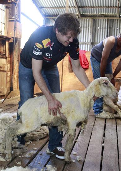 Vettel Cukur Bulu Domba