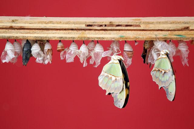 Bermain dan Belajar Dengan Kupu-kupu