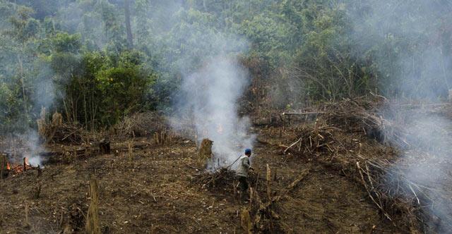 Membuka Lahan, Membakar Hutan