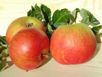 Yuk, Makan Apel Sebelum Bersepeda!