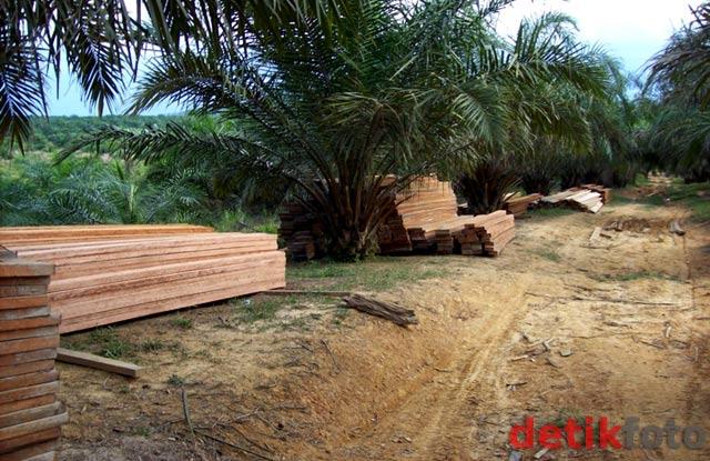 Hutan Lindung Bukit Suligi Terus Dijarah