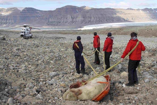 Diserang Beruang Kutub, Pelajar Tewas