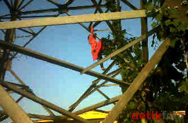 Fitri 'Spiderkid' Kembali Beraksi