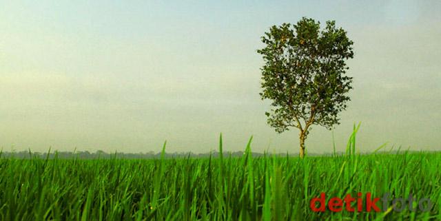 Pesona Alam di Tengah Jawa