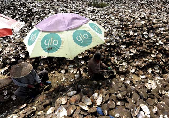 Melihat 'Peternakan' Mutiara di China