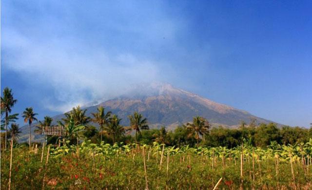 Hutan di Gunung Sumbing Terbakar