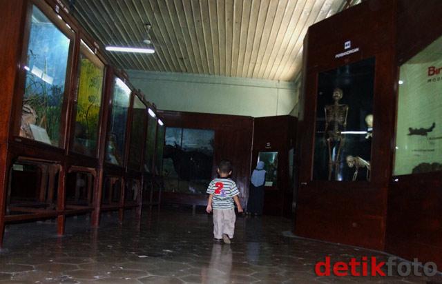 Berkunjung ke Museum Zoologi Bogor