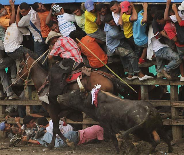 Tarung Banteng ala Matador di Kolombia