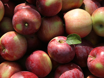 Sebutir Apel Bisa Kurangi Resiko Stroke