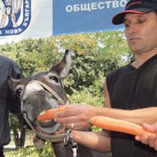 Keledai Ini Jadi Calon Walikota