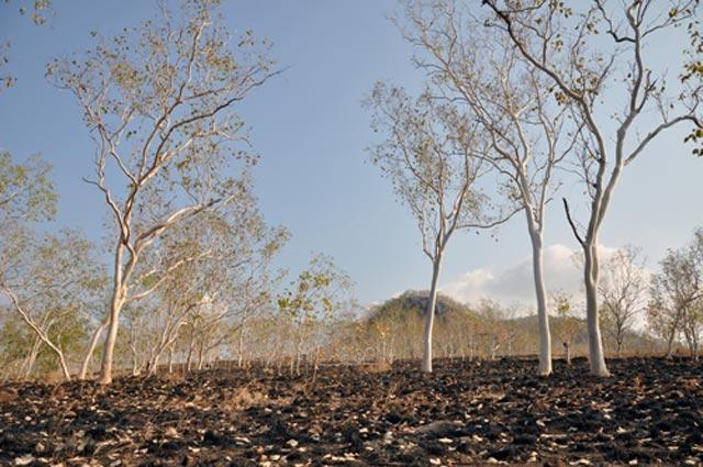Kekeringan di Nusa Tenggara Timur