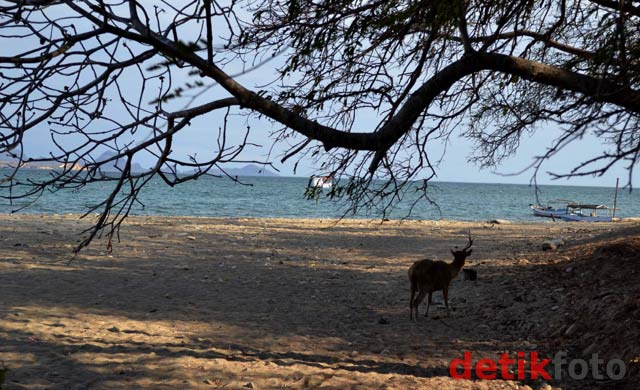 Menikmati Keindahan Pulau Komodo
