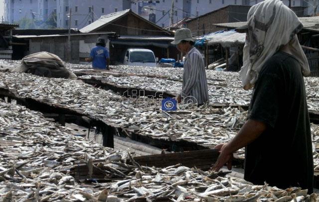 Ikan Asin Hasilkan Milyaran Rupiah