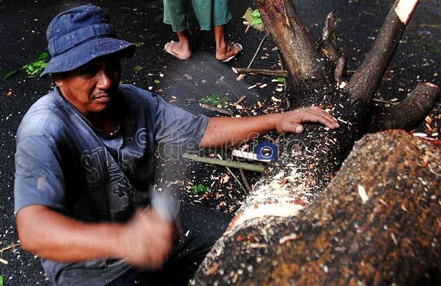 Hujan Angin, Pohon di Rawamangun Tumbang