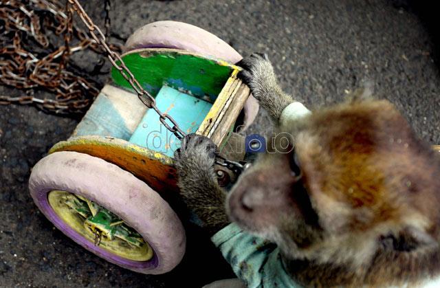 Rantai Pasung si Topeng Monyet