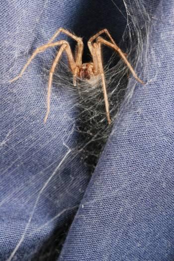 ... satu yang paling aneh adalah tablet yang mengandung jaring laba-laba