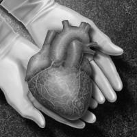 Harga Organ Tubuh Manusia Di Pasar Ilegal Dunia
