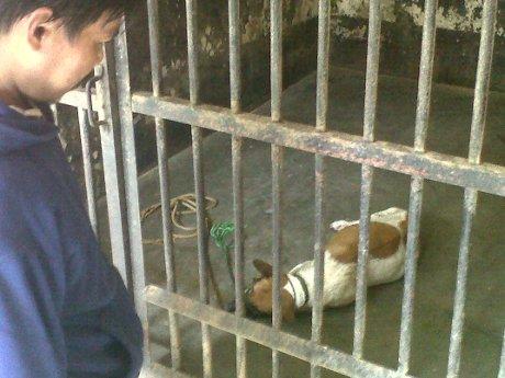 Anjing yang memakan puluhan kambing di BAnyumas